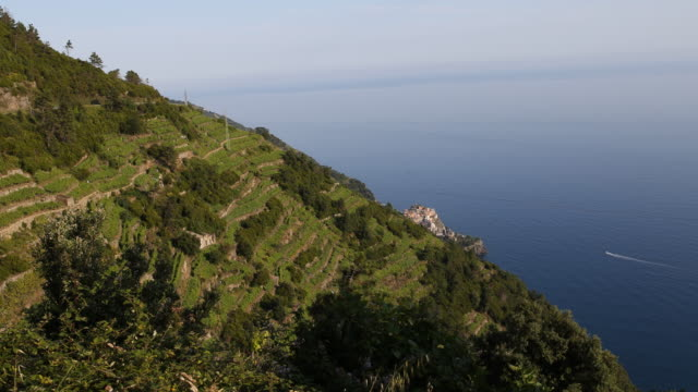 Short panning from bottom to top of beautiful green vineyards and a picturesque village of the Cinque Terre on the Italian Riveria Liguria Italy