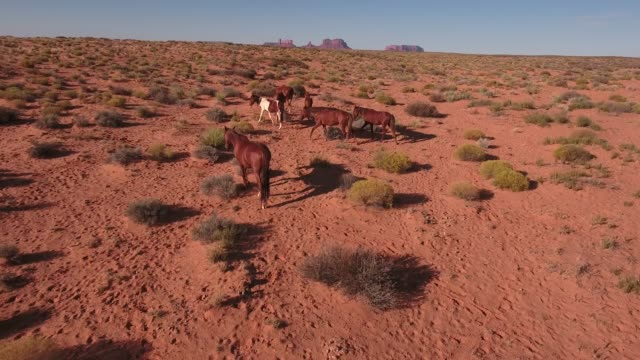 short slow hover wild horses, drone aerial 4k, monument valley, valley of the gods, desert, cowboy, desolate, mustang, range, utah, nevada, arizona, gallup, paint horse .mov - paint horse stock videos & royalty-free footage
