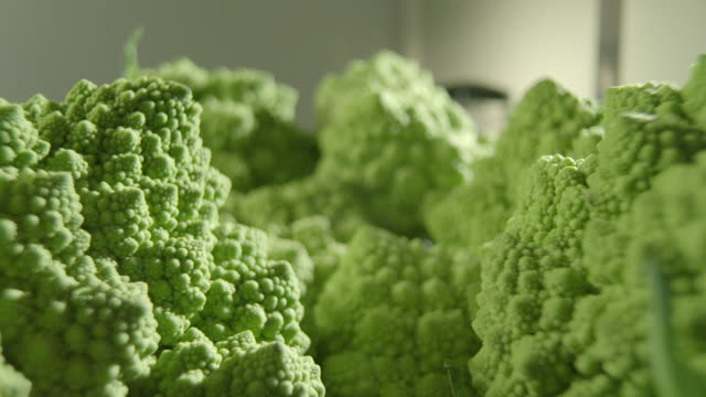 pov shot across a pile of romanesco cauliflowers. - cauliflower stock videos & royalty-free footage