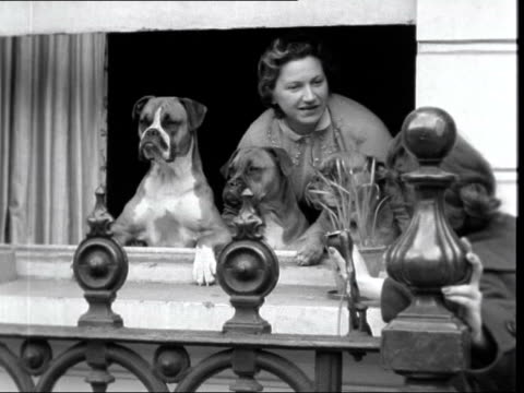 kensington london ext gv houses at west kensington cu sign'emperors gate' woman looking out of window with 2 boxer dogs by side her dogs have been... - owner stock videos & royalty-free footage