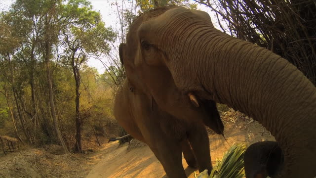 pov shot - feeding an elephant a banana - banana stock videos & royalty-free footage