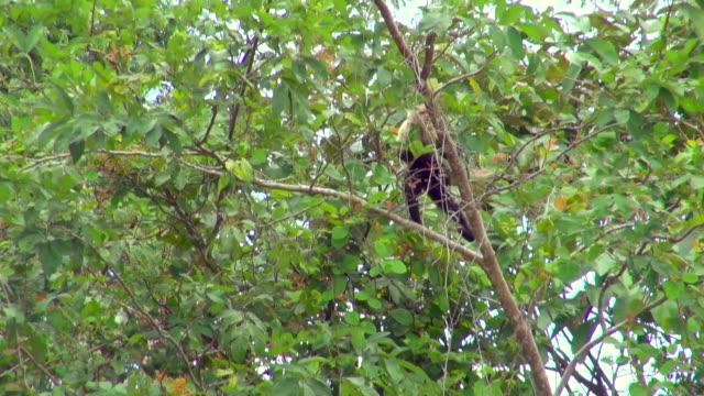 Shot Following a Monkey Climbing Up a Tree