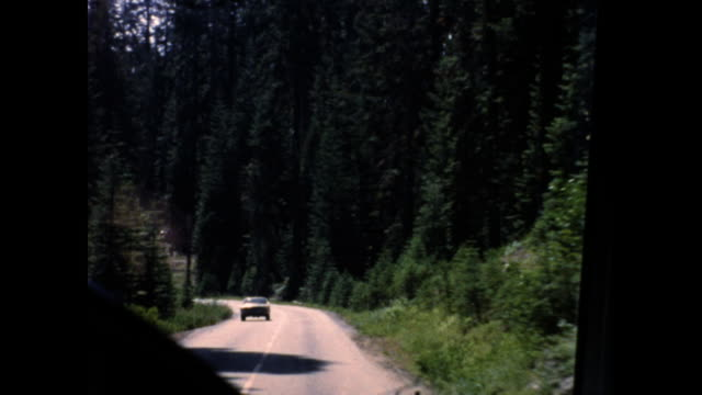 shot from a moving car driving in the forest, cars pass on the opposite road; trees on both sides of the road - the cars stock videos & royalty-free footage