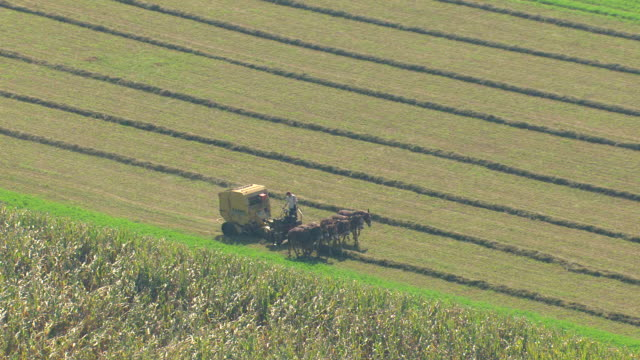 MS AERIAL TS ZO Shot od six horses pulling harvester at farm field in Amish country / Pennsylvania, United States