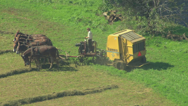 CU AERIAL ZO Shot od six horses pulling harvester at farm field in Amish country / Pennsylvania, United States