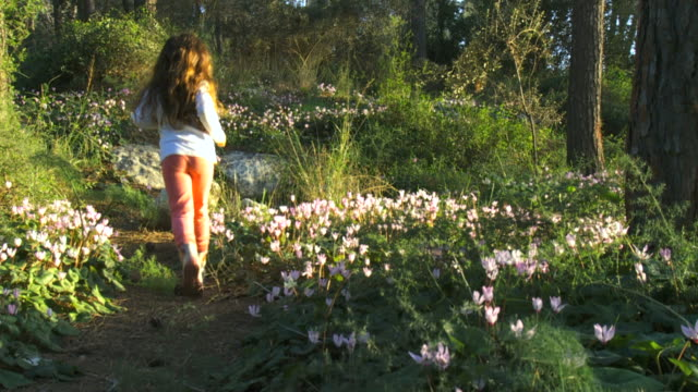 ms slo mo shot of 6 year old girl running through jnf pine forest with mediterranian primerose  flower bloom / judea, israel - pine stock videos and b-roll footage