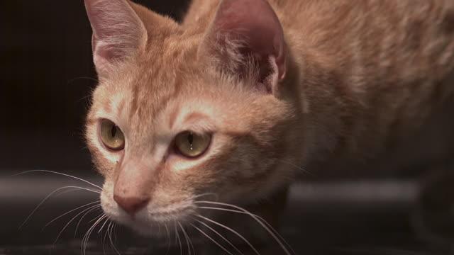vídeos de stock, filmes e b-roll de shot of a cat approaching to something - bigode de animal