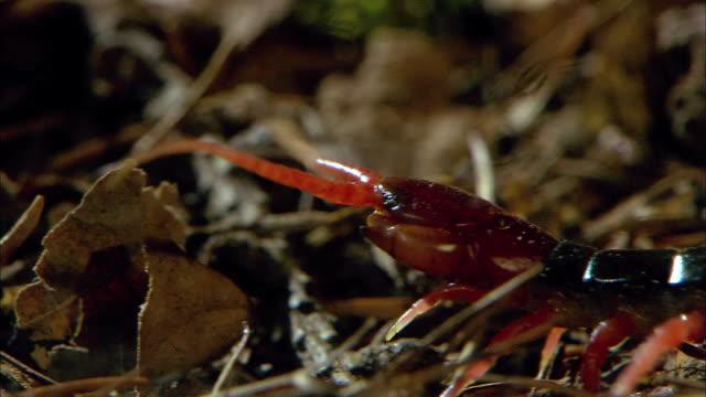 shot of a centipede crawling on the ground - hundertfüßer stock-videos und b-roll-filmmaterial