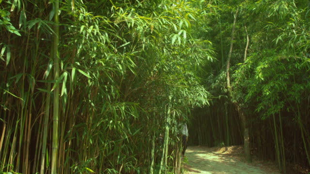 shot of a couple strolling on the pathway at juknokwon(bamboo garden) - bamboo plant点の映像素材/bロール