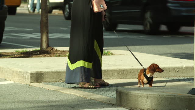 Shot of a Dachshund on a lead waiting to cross a road in Greenwich Village, NY
