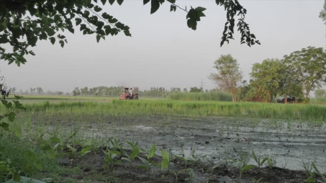 shot of a distant tractor in the lush green crop fields in punjab india - punjab india stock videos and b-roll footage