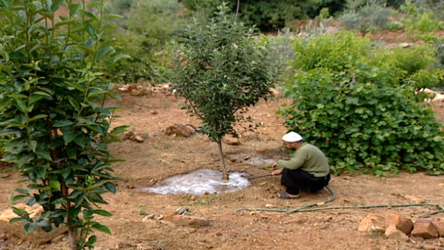 shot of a druze farmer irrigating a tree and tending to an orchard in a hasbaya field. his skull cap indicates that he is a juhhal, aka an... - irrigation equipment stock videos & royalty-free footage