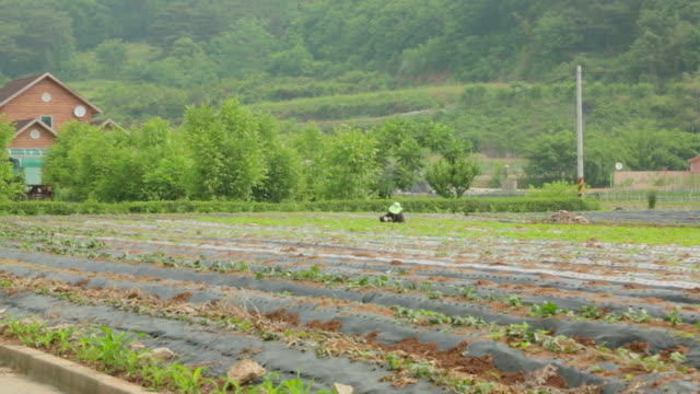 shot of a farmer sowing at the farmland - damyang stock videos & royalty-free footage