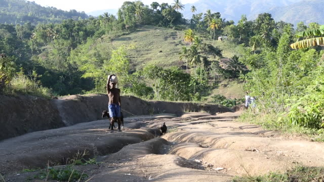 ws shot of a farmer that is walking up an arenaceous hill with two goats on leashes while carrying a white bag on his head other farmers can be seen... - afro caribbean ethnicity stock videos and b-roll footage
