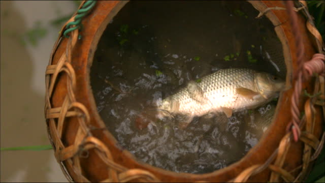 shot of a fish being thrown into a water pot - angeln stock-videos und b-roll-filmmaterial