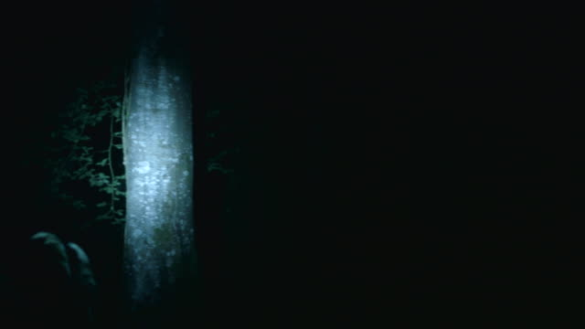 shot of a flashlight illuminating trees at night. - electric torch stock videos & royalty-free footage