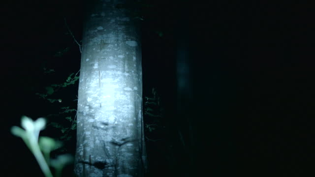Shot of a flashlight illuminating trees at night.