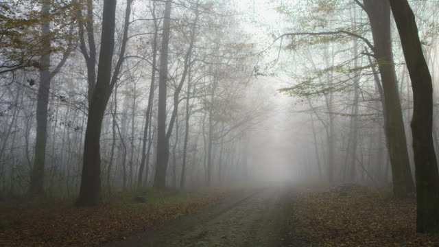 shot of a foggy forest