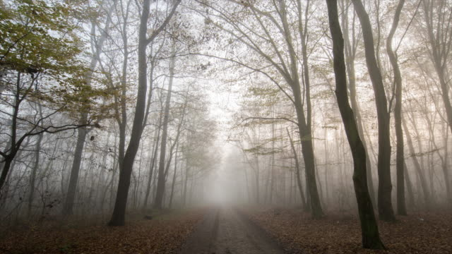 t/l 8k shot of a footpath through foggy forest - sentiero video stock e b–roll