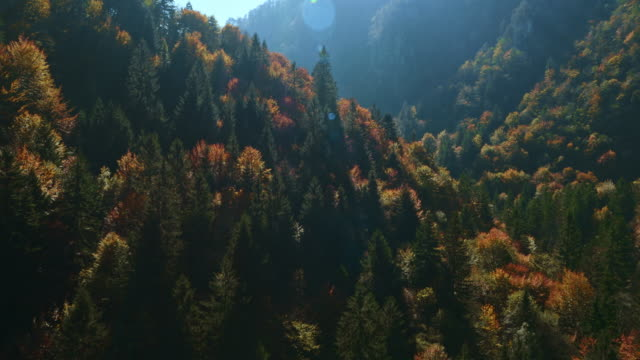 AERIAL shot of a forest in the autumn sun