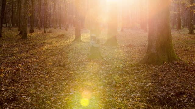 T/L 8K shot van een bos ondergroei in sunrise