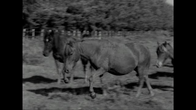 shot of a herd of new forest wild ponies. - animals in the wild stock videos & royalty-free footage