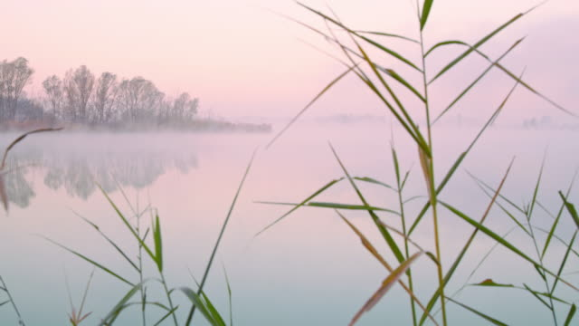 shot of a lake in the fog - marsh stock videos & royalty-free footage