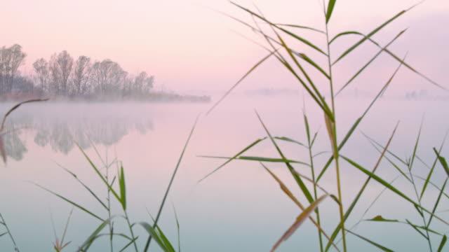 vídeos de stock, filmes e b-roll de tiro de um lago no meio do nevoeiro - pântano salgado