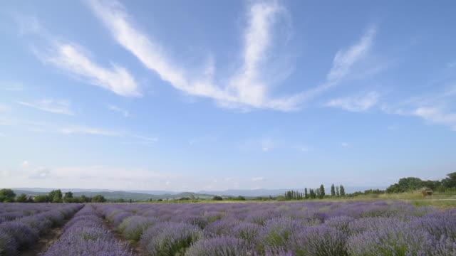 vídeos y material grabado en eventos de stock de td shot of a lavender field - cirro
