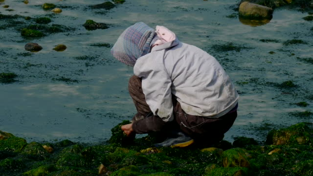 Shot of A Manual Worker picking brown seaweed with both hands at the sea