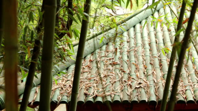 shot of a part of bamboo grove - damyang stock videos & royalty-free footage