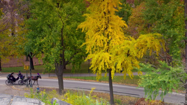 shot of a path outside central park, new york city. the trees are in full fall colors.  a horse-drawn carriage enters the shot and moves along the road.  joggers can be seen running along the paths - arbeitstier stock-videos und b-roll-filmmaterial