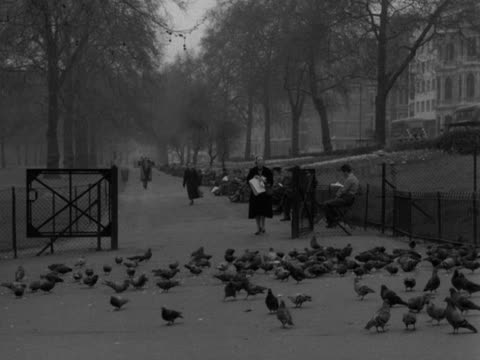 vídeos de stock, filmes e b-roll de shot of a pathway in green park a flock of pigeons wander around the ground and people sit on benches 1957 - parque green
