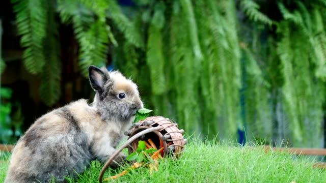 shot of a rabbit eatting carrot in farm - gabbia per gli uccelli video stock e b–roll