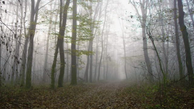 shot of a road through foggy forest