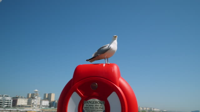 shot of a seagull standing on a life ring on brighton's palace pier. - seagull stock videos & royalty-free footage