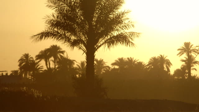 POV shot of a silhouetted palm tree on the banks of the River Nile in Egypt.