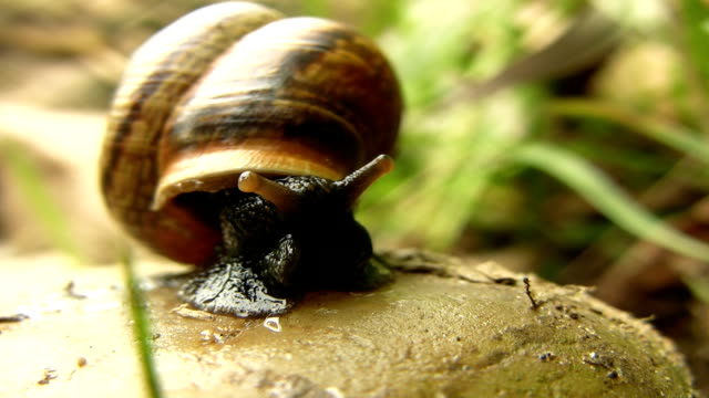 hd macro: shot of a snail - animal shell stock videos & royalty-free footage