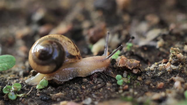 shot of a snail´s gallop on the ground - snail stock videos & royalty-free footage