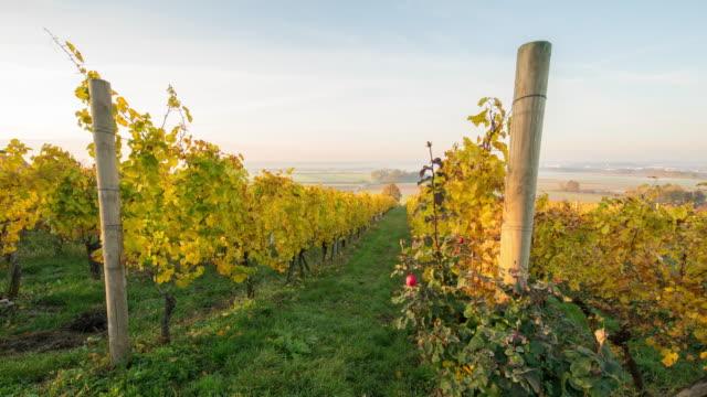 t/l 8k shot of a sunrise over autumn vineyards - uva video stock e b–roll