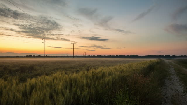 T/L 8K shot of a wheat field at dawn