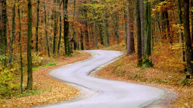 shot of a winding road through autumn forest - september stock videos and b-roll footage