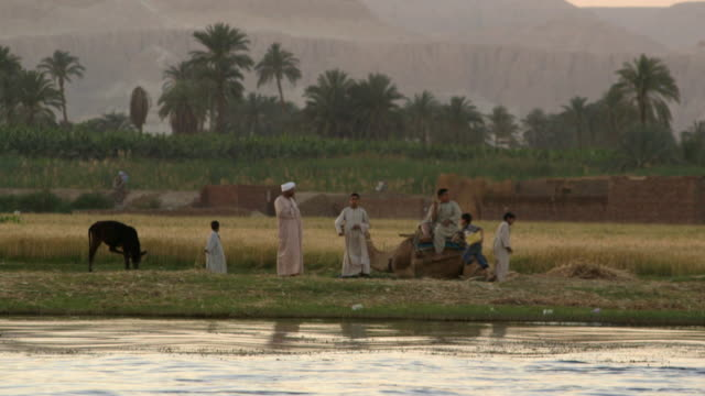 stockvideo's en b-roll-footage met pov shot of a young family with a camel playing on the banks of the river nile in egypt. - cereal plant