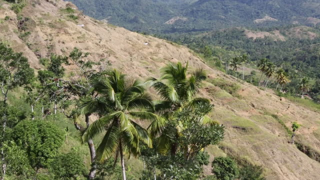 zo shot of an agricultural landscape and erosion in a rural area in pilate haiti with mountains in the background a cow can be seen in the foreground - garden hoe stock videos & royalty-free footage