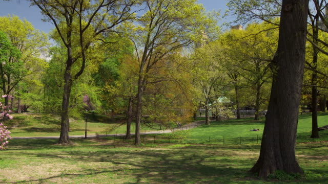 shot of an open area along a path in central park, nyc. a portion of the lake can be seen in the background - prato rasato video stock e b–roll