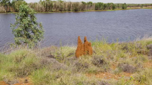 a shot of an orange rock with grass and river - baumgruppe stock-videos und b-roll-filmmaterial