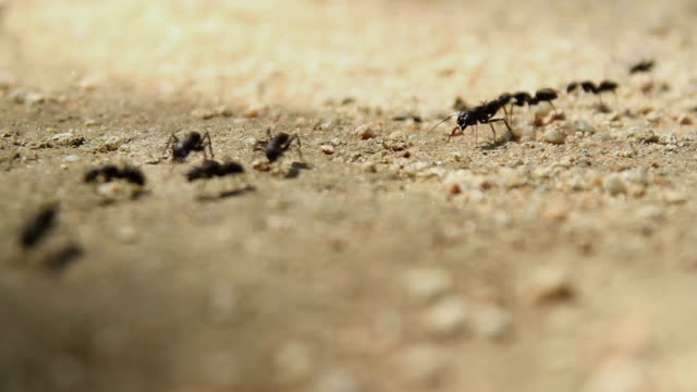 Shot of ants on the ground