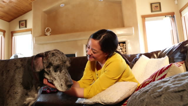 stockvideo's en b-roll-footage met ms shot of asian woman playing with her large dog in her living room / santa fe, new mexico, united states - alleen één mid volwassen vrouw