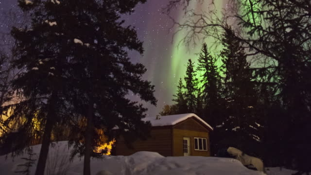 MS TU T/L Shot of Aurora and log cabin above snow covering forest / Yellowknife, Northwest Territories, Canada