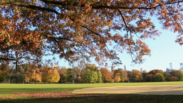 ws pan tu shot of autumn color trees and manhattan skyline at great lawn / new york, united states - great lawn stock videos and b-roll footage